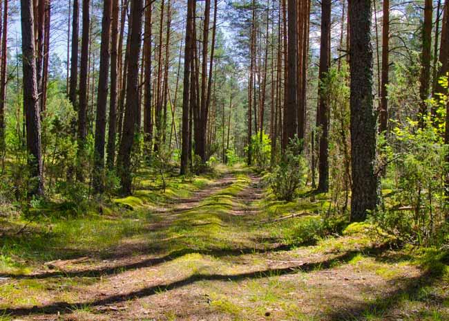 zervynos-lithuania-forest-trail